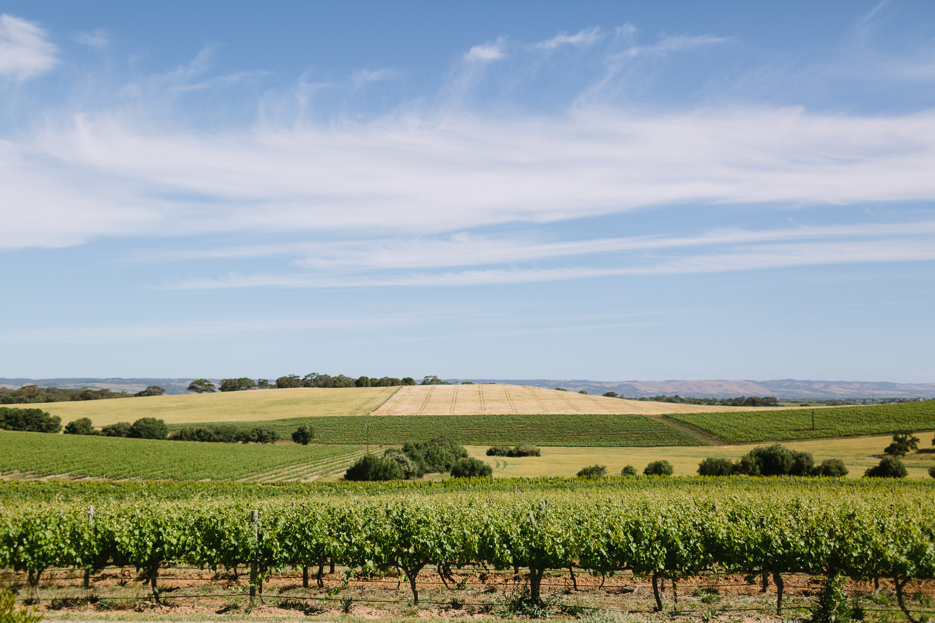 view at coriole winery in mclarenvale