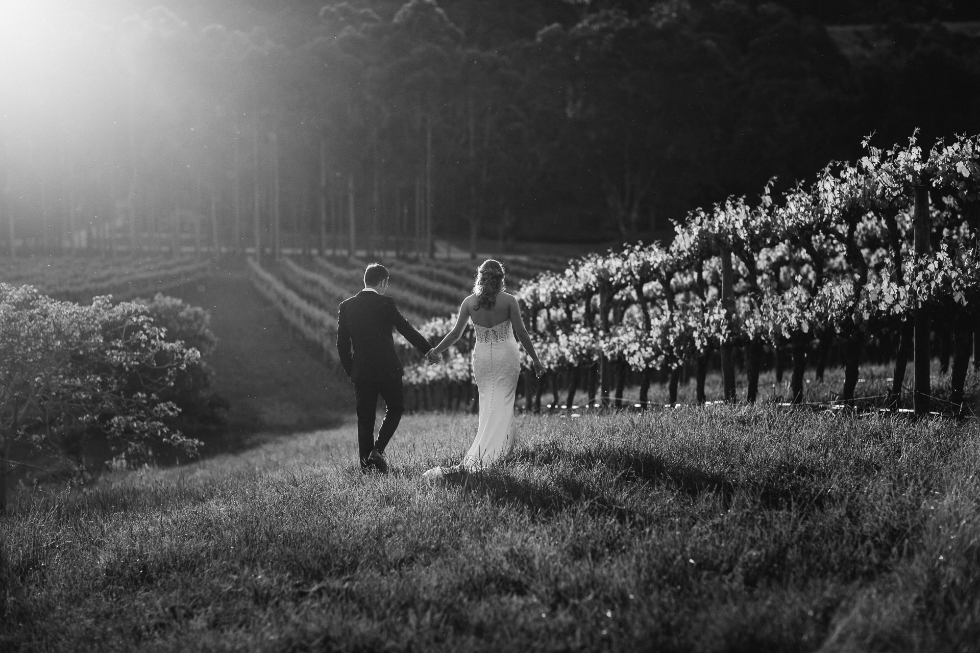 black and white photo of bride and groom at sunset in the vines at K1 winery Kuitpo Adelaide